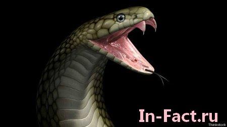 Я в шоке! что происходит с вашей кровью после укуса ядовитой змеи смотреть  ...